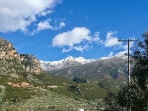 Silbrig-grün glänzt der Olivenhain (im Bild unten links) in fast unberührter Natur am Fuße des schneebedeckten Taygetos. / Jan. 2018